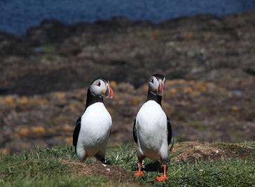 Shetland Otter, Seabird and Landscape Photography