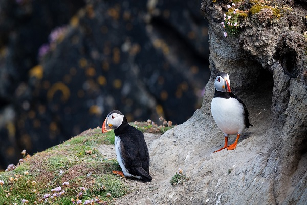 Trips and Tours in Shetland